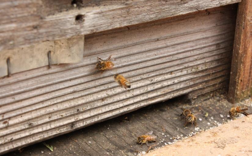ミツバチの巣箱を設置!