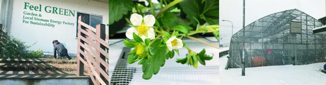 【週刊いちご畑から】2番果の花が次々と